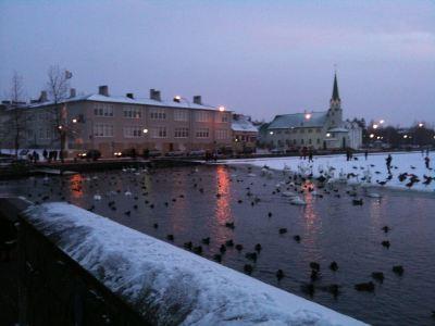 Tjörnin (The Pond) is a centerpiece of Reykjavik.